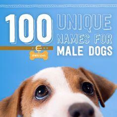 Unique dog names for your new boy.