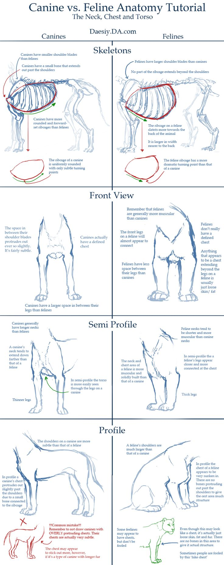 Canine v Feline Chest Anatomy Tutorial by Daesiy.deviantart.com on @deviantART