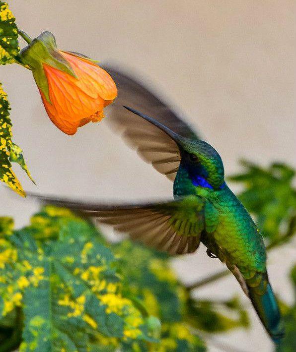 hummingbirds - lovely inspirations for art