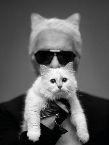 Karl Lagerfeld on his kitten, Choupette
