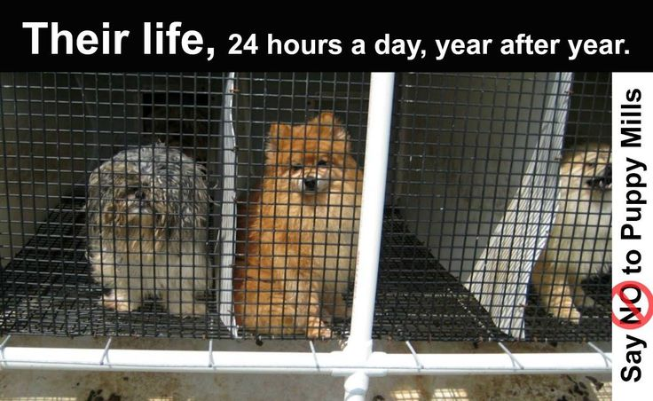 Please REPIN to show others this is where pet store puppies come from. #nomorepuppymills