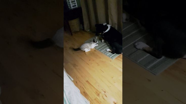 My cat and dog wrestling (YouTube 25sec) https://youtu.be/lqcQkBDINlI