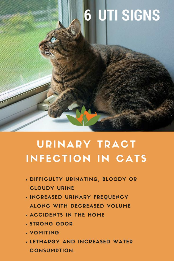 Vet Talk Urinary Tract Infections In Dogs And Cats Cat