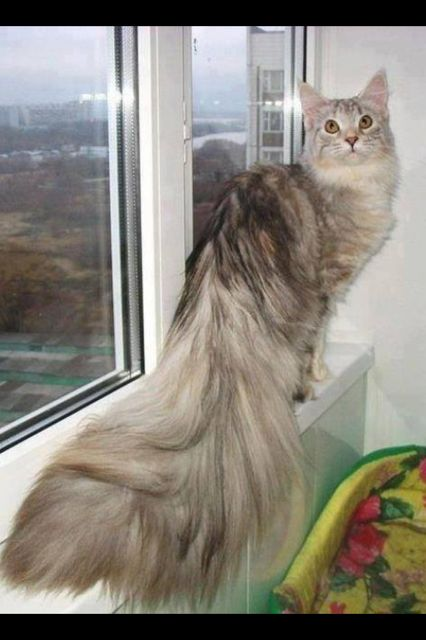 What a gorgeous tail!! <3