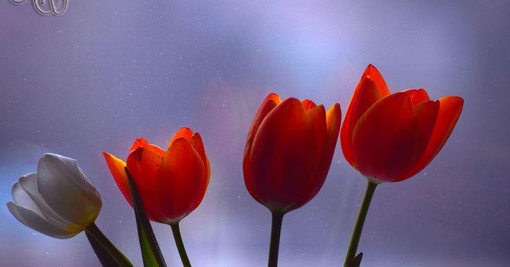 Zâmbete în floare