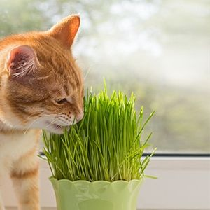 9 non toxic house plants for cat parents cats for cats and parents. Black Bedroom Furniture Sets. Home Design Ideas