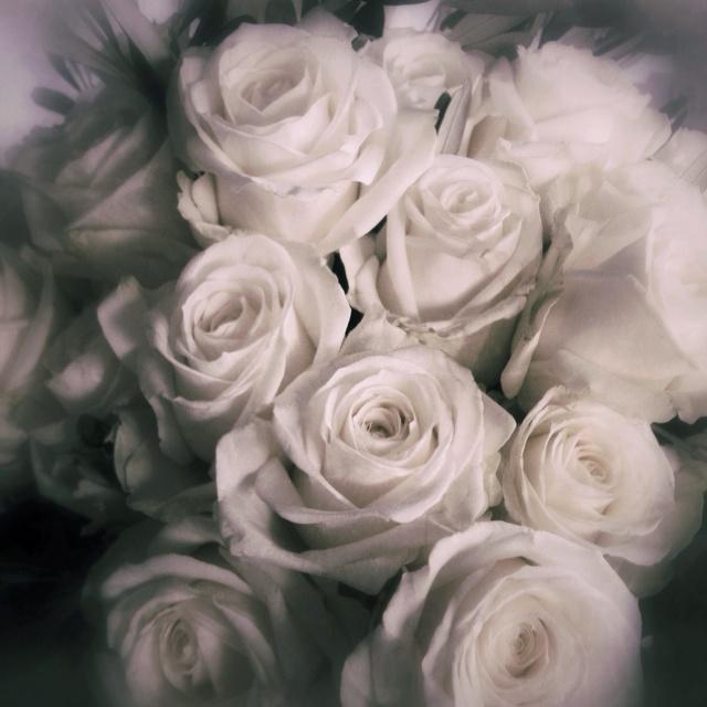 18 Best White Rose Wallpaper Images On Pinterest