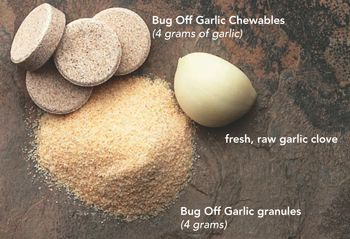 Bug Off Garlic for Dogs | Natural Flea and Tick Repellent | Springtime, Inc. we use this every summer, works great.
