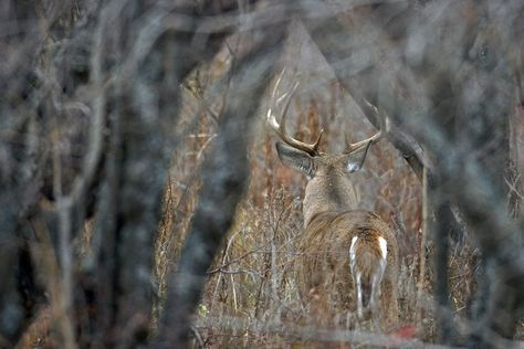 These Things Will Invite More Deer to Live Where You Hunt http://riflescopescenter.com/nikon-monarch-review/