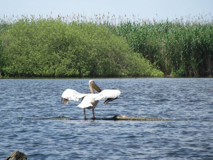 Some 300 species of birds are found in the marshes and lakes of the Danube Delta, Romania.