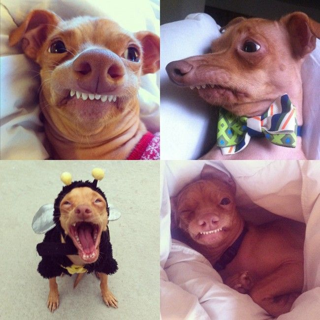 Tuna : Dog abandoned for being ugly, now worshiped worldwide