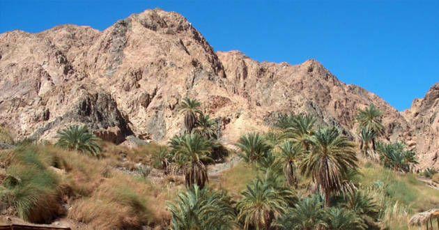 Meget mere end pyramider og solstik: Her er fem naturoplevelser, du bør unde dig selv i Egypten - Politiken.dk