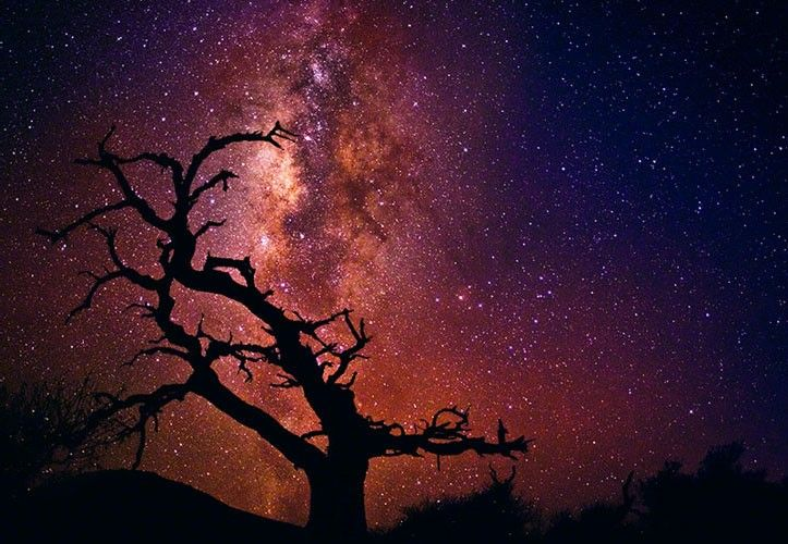 TREE OF THE UNIVERSE MAUNA KEA, THE BIG ISLAND, HAWAII by Peter Lik