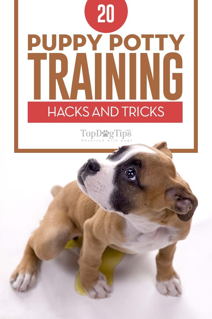 20 Puppy Potty Training Hacks Puppy Potty Training Tips