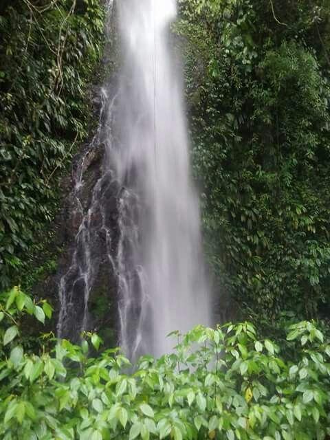 Anchicaya-Bellavista, PNN Farallones, municipio de Dagua, Valle del Cauca, Colombia