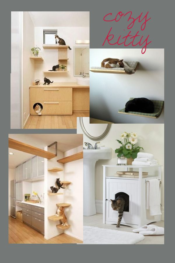 A Cats Space   Perfect!