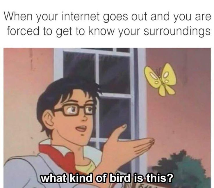 When your internet goes out and you are forced to know your surroundings   http://ift.tt/1WwV0SN via /r/funny http://ift.tt/1sbz6HH  funny pictures