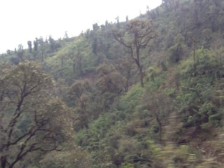 Tucuman. Selva Tucumana
