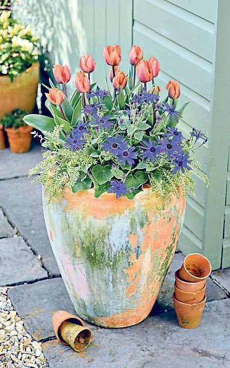 Tulips in a tall pot