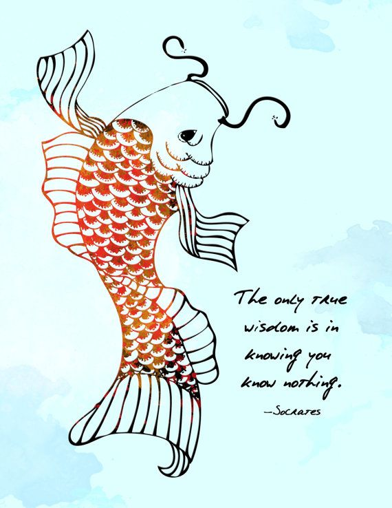 Koi fish socrates quote 8x10 metallic print by for Quotes about fish