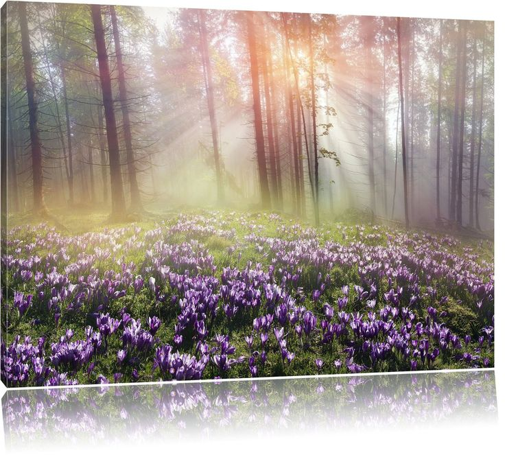 Lavender in the forest, painting on canvas, XXL Pictures completely framed with large wedge frames, wall picture art print with frame, cheaper than painting or an oil painting, not a poster or placard, Leinwand Format:100x70 cm: Amazon.co.uk: Kitchen & Home