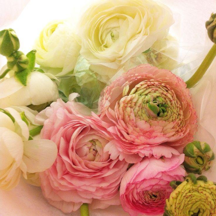 Ranunkler, flowers love my job!