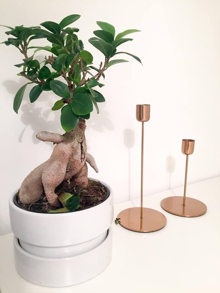 Look at this cute bonsai!