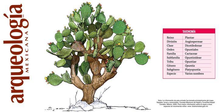 68 best images about cactus y suculentas on pinterest - Informacion sobre los cactus ...