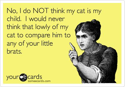 Funny Somewhat Topical Ecard: No, I do NOT think my cat is my child. I would never think that lowly of my cat to compare him to any of your little brats.