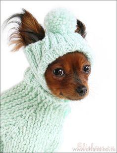 Вязаная одежда для собак, для маленьких таких модниц:)