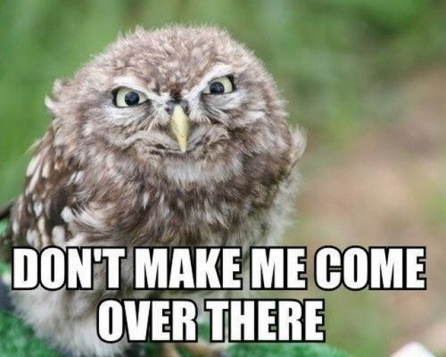 Owl get you! Funny captions make cute photos better (27 photos)*Click for all.