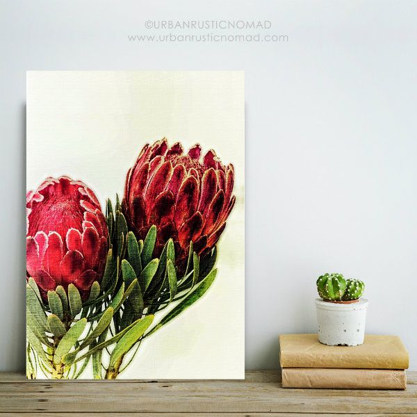 Protea Botanical Native Flower wall art prints - enjoyed creating these as they are indigenous to my home country, and make a striking and impactful wall gallery :) http://etsy.me/2H90qik instant download  #protea #proteas #wallart #wallgallery #nativeprint #southafrica #nationalflower #flowers #botanical #green #greenhome #homedecor #interiors #interiordesign #interiordesigninspiration #red #green #floralart #interiordesignideas #urbanrusticnomad #globalinfluence #interiorblogger…