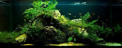 aquascaping news eden aquascaping aquarium goals aquarium blog aquatic ...