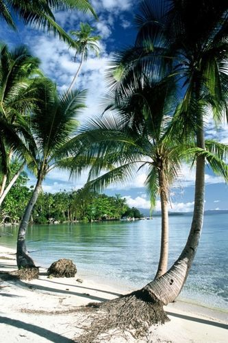 Uepi Island Resort  Marovo Lagoon  Solomon Islands