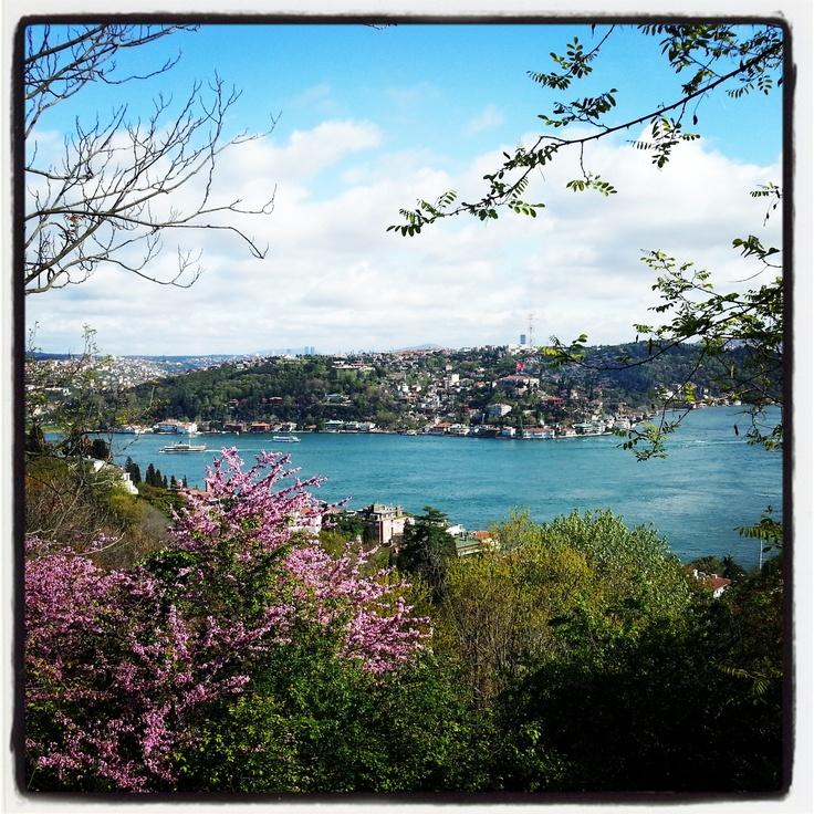 Bogazici Universty - #nature #istanbul