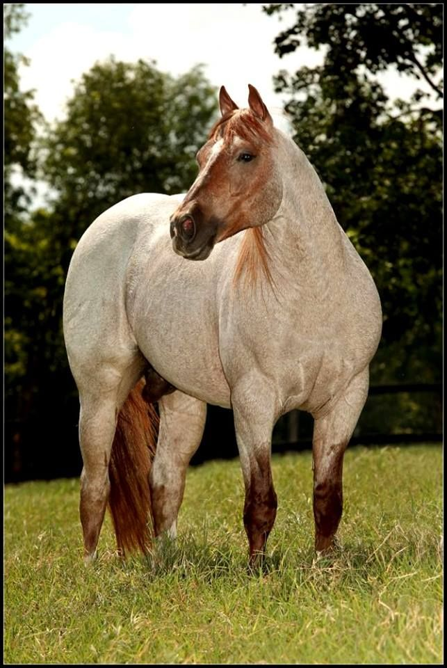 Paint Quarter Horses For Sale In Tennessee