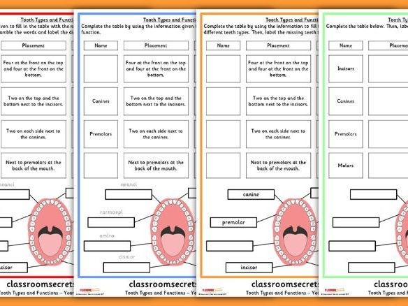 Differentiated Tooth Types And Their Functions Worksheets For Year 4 Teaching Resources Dental Hygiene Student Teaching Resources Differentiation