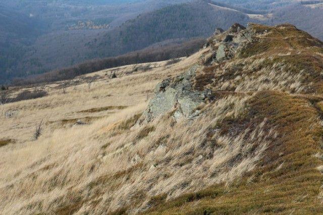 Widok z Tarnicy