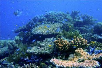 Cuestionan La Mejora En La Gran Barrera De Coral Anunciada Por Australia