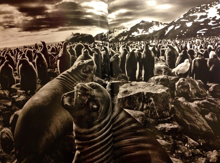 Sebastiao Salgado at Natural History Museum London until 8th September