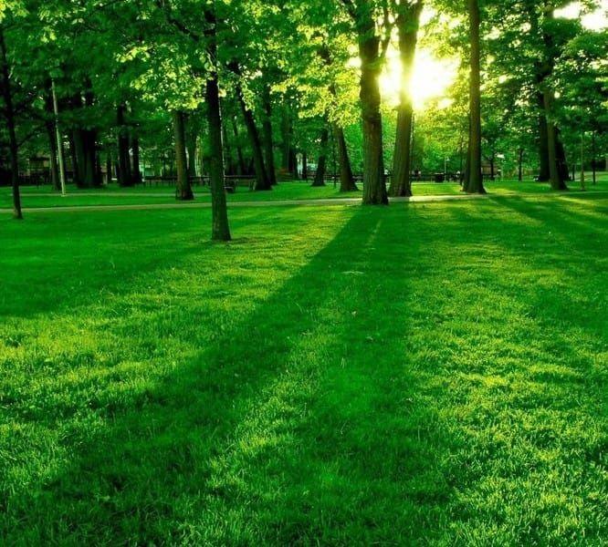 Verde verticale e parchi.: giardino in stile di dotto francesco consulting green