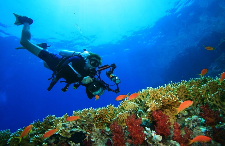 SCUBA in Halkidiki - They also offer a 7 day certification package.   diving experiences @  http://www.eaglespalace.gr