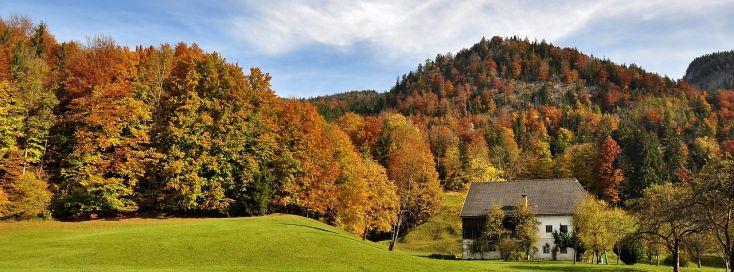 Top-Farben für den Herbst   Hurra Hurra der Herbst ist da wenn wir doch alle mal ganz ehrlich sind freuen wir uns doch alle dass endlich der Herbst da ist in seinen vollen Zügen weil eigentlich haben wir ja seit März Herbst aber erst jetzt sehen die Bäume so schön aus INDIAN SUMMER nennt man das! Wenn die Bäume rot gelb grün leuchten Und was die Bäume können das können die Herren jetzt nämlich auch Denn es gibt so wunderbare Strickpullover Cardigans T-Shirts Jacken und Mäntel in diesen…
