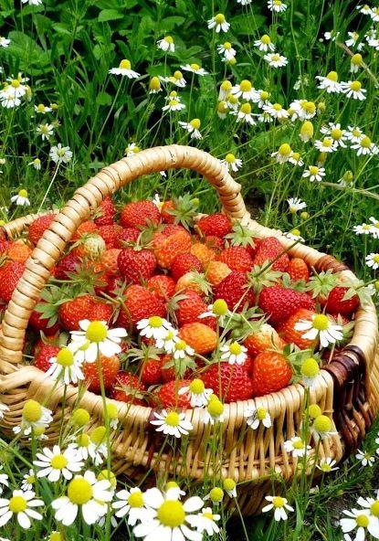 Strawberries....very luscious looking....