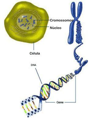 Genes e projeto genoma - Só Biologia