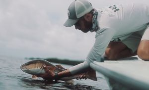 Redfish are known to aggressively chase topwater lures and watching them eat one is incredible! Check out this video from Pine Island Sound.