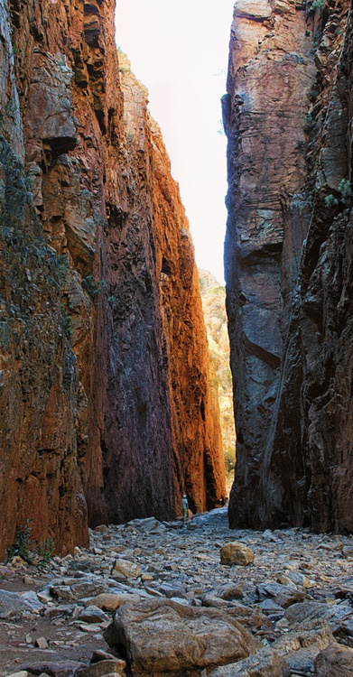patcameron:    'Standley Chasm'  Red centre colours at Standley Chasm, near Alice Springs