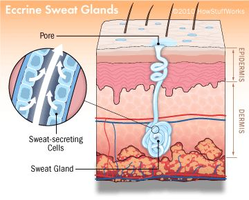 Overactive Sweat Glands: What Are The Causes For It? - Stop Sweating Help