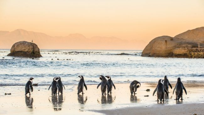 From sandboarding to the local cuisine and wildlife, get off the beaten path with these top unique experiences in Cape Town, South Africa.