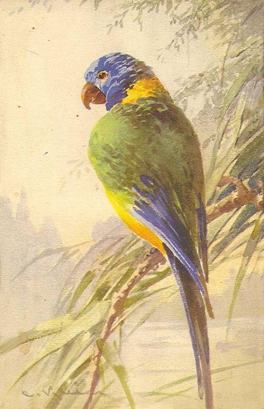 Открытка, попугай открытка